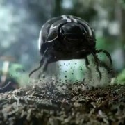 Реклама Volkswagen: черный жук