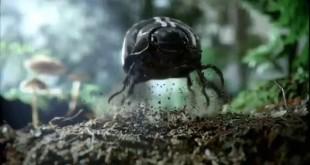 старая реклама Volkswagen жук