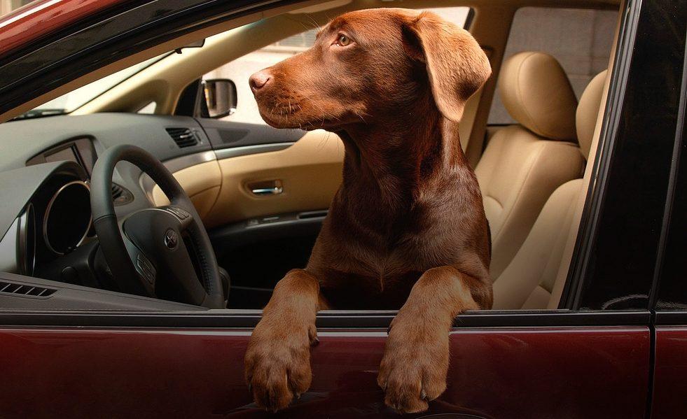Новые требования к перевозке животных в машине