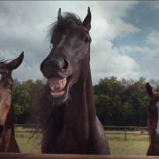 Новая реклама Volkswagen Tiguan или «Коням не на смех…»