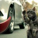 «Спасти кошку…» или 11 машин в хлам. Видео дня