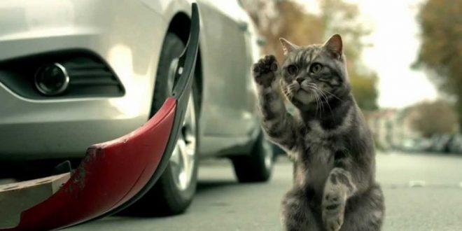 """""""Котика жалко..."""" или 11 машин в хлам. Видео дня"""