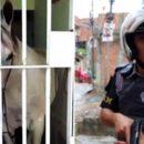 Лошадь посадили в камеру за порчу автомобиля