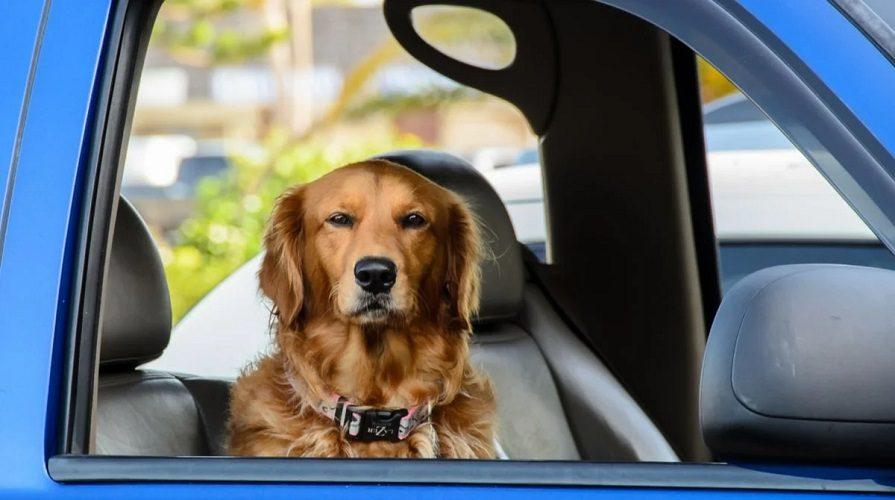 Собака в авто: три причины для остановки ГИБДД